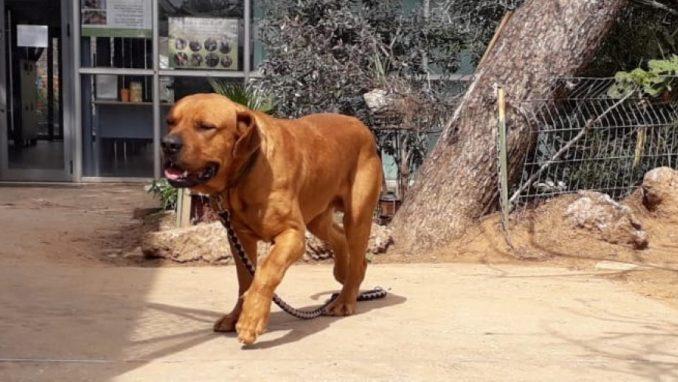 ג'וי - כלב לאימוץ - אגודת צער בעלי חיים בישראל