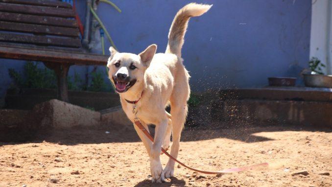 ג׳וני - כלב לאימוץ - אגודת צער בעלי חיים בישראל