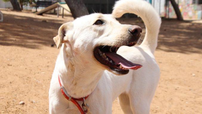 דובי - כלבה לאימוץ - אגודת צער בעלי חיים בישראל