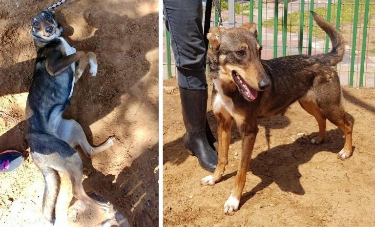 דוכסית - כלבה לאימוץ - אגודת צער בעלי חיים בישראל