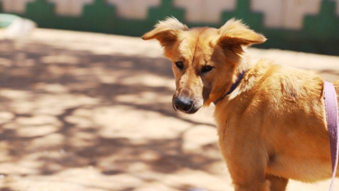 טאקי - כלב לאימוץ - אגודת צער בעלי חיים בישראל
