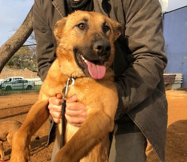 לונה - כלבה לאימוץ - אגודת צער בעלי חיים בישראל