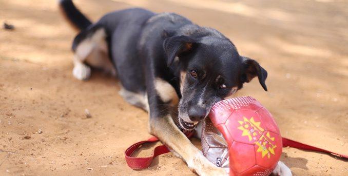 לוסי – כלבה לאימוץ – אגודה צער בעלי חיים ישראל