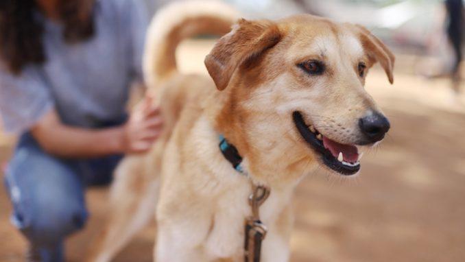 מיקה – כלבה לאימוץ – אגודה צער בעלי חיים ישראל