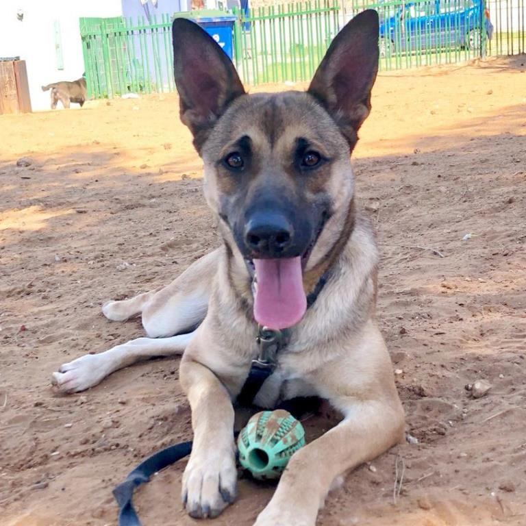 נאווה - כלבה לאימוץ - אגודת צער בעלי חיים בישראל