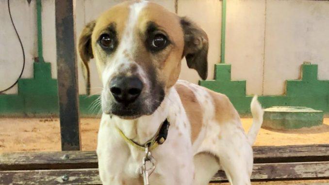 סנדי - כלבה לאימוץ - אגודת צער בעלי חיים בישראל