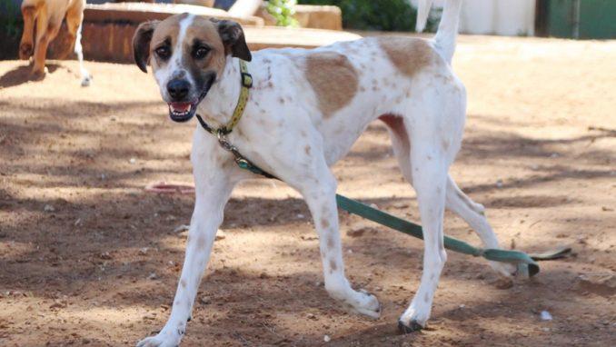 סנדי – כלבה לאימוץ – אגודה צער בעלי חיים ישראל