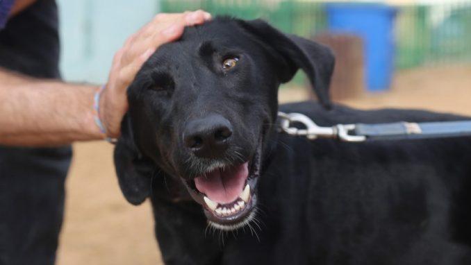 רפי - כלב לאימוץ - אגודת צער בעלי חיים בישראל