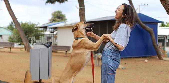 שולה - כלבה לאימוץ - אגודת צער בעלי חיים בישראל