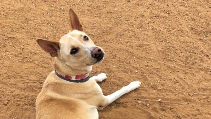 תומאס – כלב לאימוץ – אגודת צער בעלי חיים בישראל