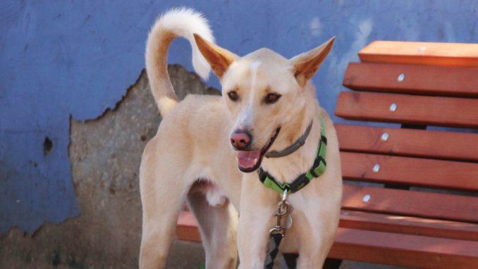 תומס – כלב לאימוץ – אגודת צער בעלי חיים בישראל