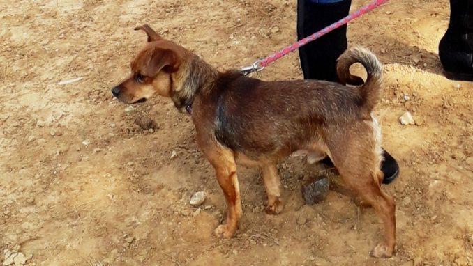 טוני – כלב לאימוץ – אגודה צער בעלי חיים ישראל