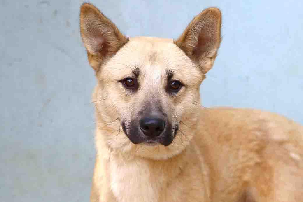 ג'וני כלב לאימוץ אגודת צער בעלי חיים בישראל