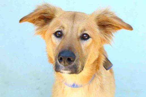 טאקי – כלבה לאימוץ – אגודת צער בעלי חיים בישראל