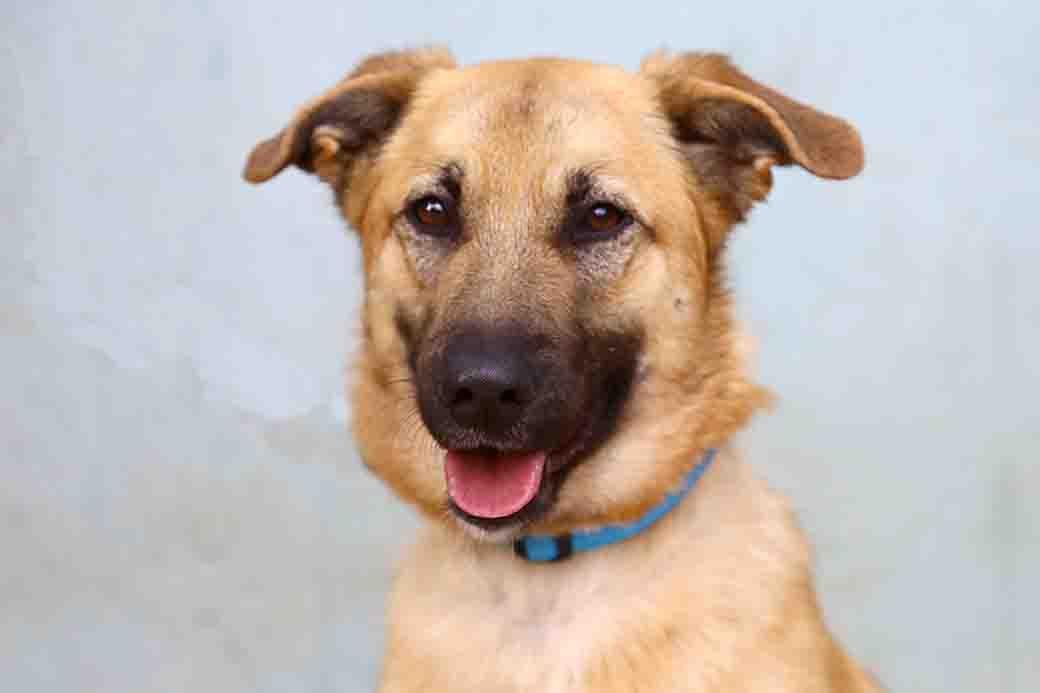נאיה כלבה לאימוץ אגודת צער בעלי חיים בישראל