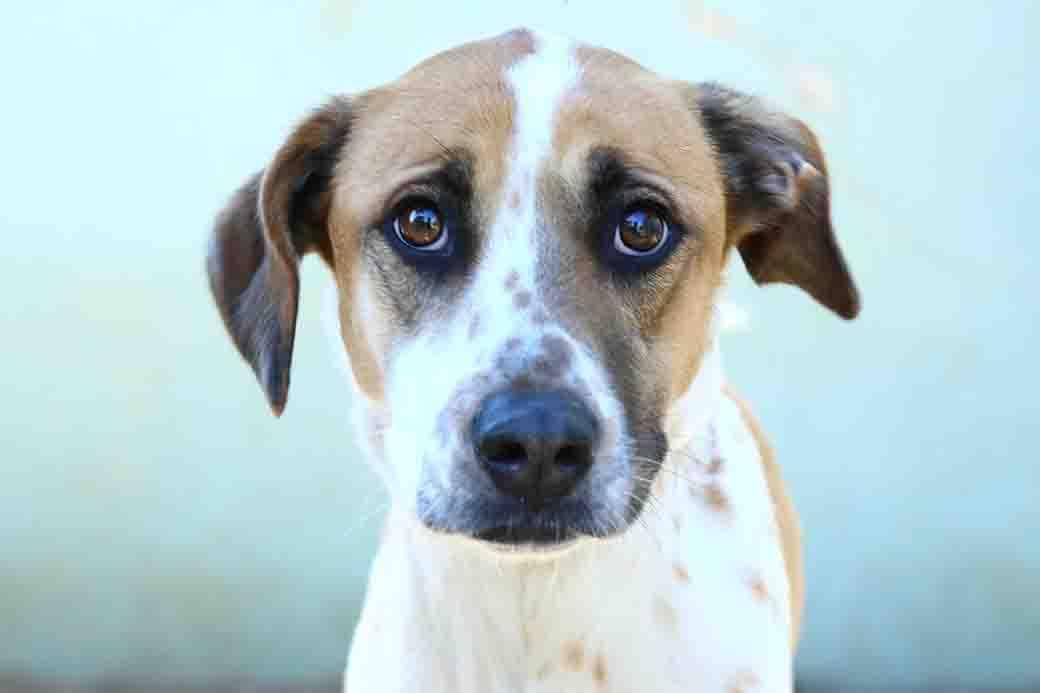 סנדי – כלבה לאימוץ – אגודת צער בעלי חיים בישראל