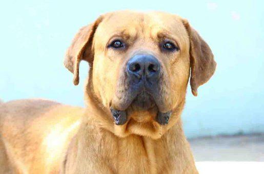 ג'וי – כלב לאימוץ – אגודת צער בעלי חיים בישראל