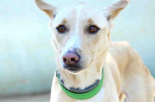 טומס – כלב לאימוץ – אגודת צער בעלי חיים בישראל