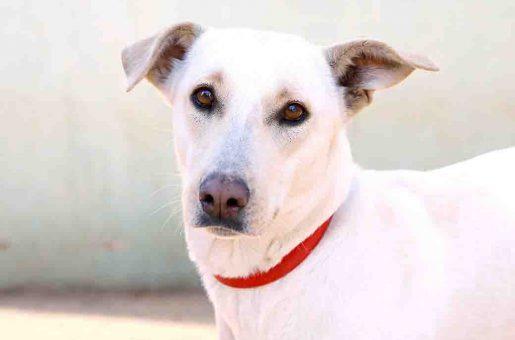 דובי – כלבה לאימוץ – אגודת צער בעלי חיים בישראל