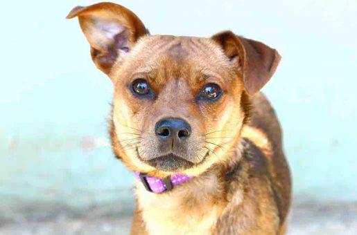 טוני – כלב לאימוץ – אגודת צער בעלי חיים בישראל