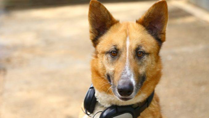סימבה – כלב לאימוץ – אגודה צער בעלי חיים ישראל