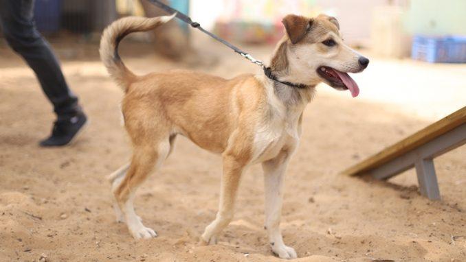 רובי - כלבה לאימוץ - אגודת צער בעלי חיים בישראל