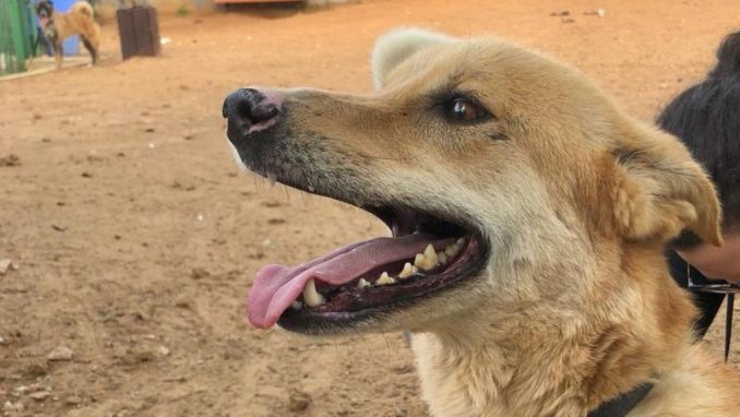 באדי – כלב לאימוץ – אגודת צער בעלי חיים בישראל