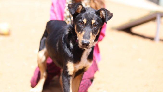 ג'סי – כלבה לאימוץ – אגודה צער בעלי חיים ישראל