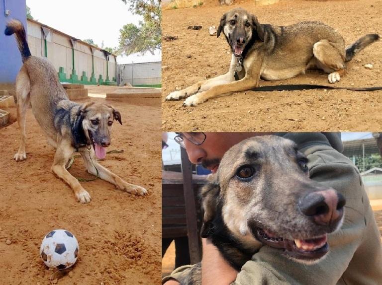ג׳סי - כלבה לאימוץ - אגודת צער בעלי חיים בישראל