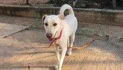 דובי – כלבה לאימוץ – אגודה צער בעלי חיים ישראל