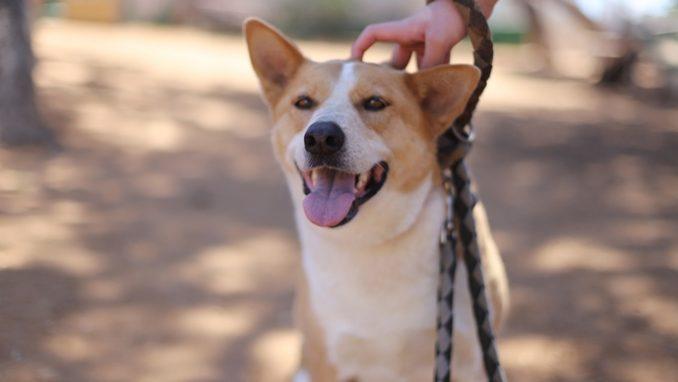 דולי - כלבה לאימוץ - אגודת צער בעלי חיים בישראל