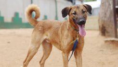 טוטו – כלב לאימוץ – אגודה צער בעלי חיים ישראל