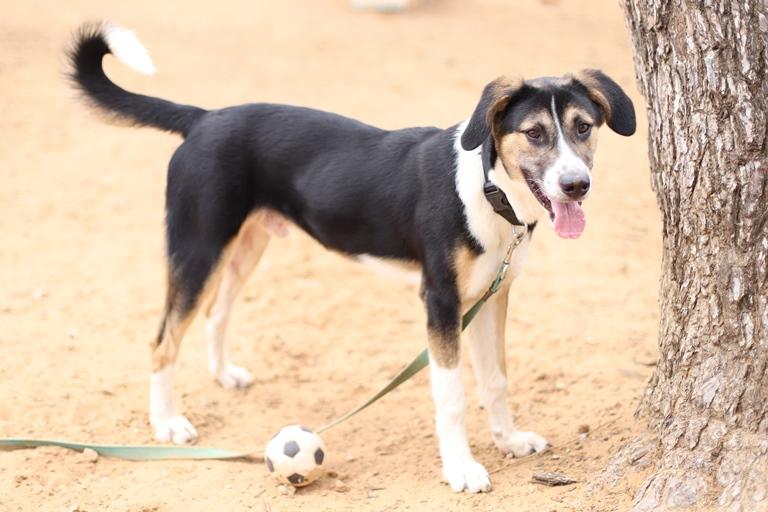 טוקו – כלב לאימוץ – אגודה צער בעלי חיים ישראל