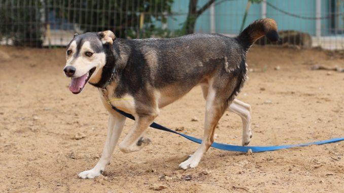 סקאי – כלב לאימוץ – אגודה צער בעלי חיים ישראל