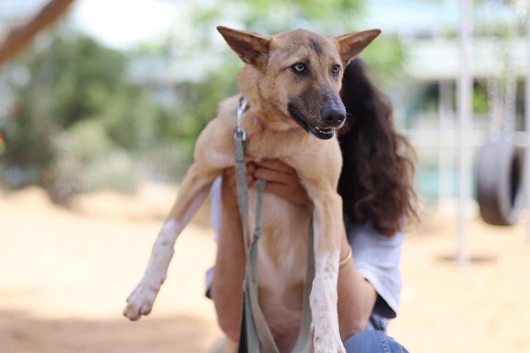פינוקיו - כלבה לאימוץ - אגודת צער בעלי חיים בישראל