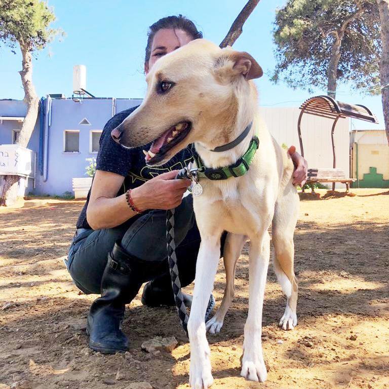 תומס - כלב לאימוץ - אגודת צער בעלי חיים בישראל