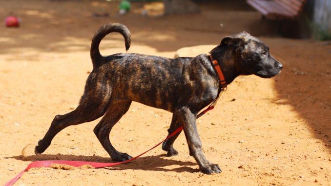 מייני - כלבה לאימוץ - אגודת צער בעלי חיים בישראל
