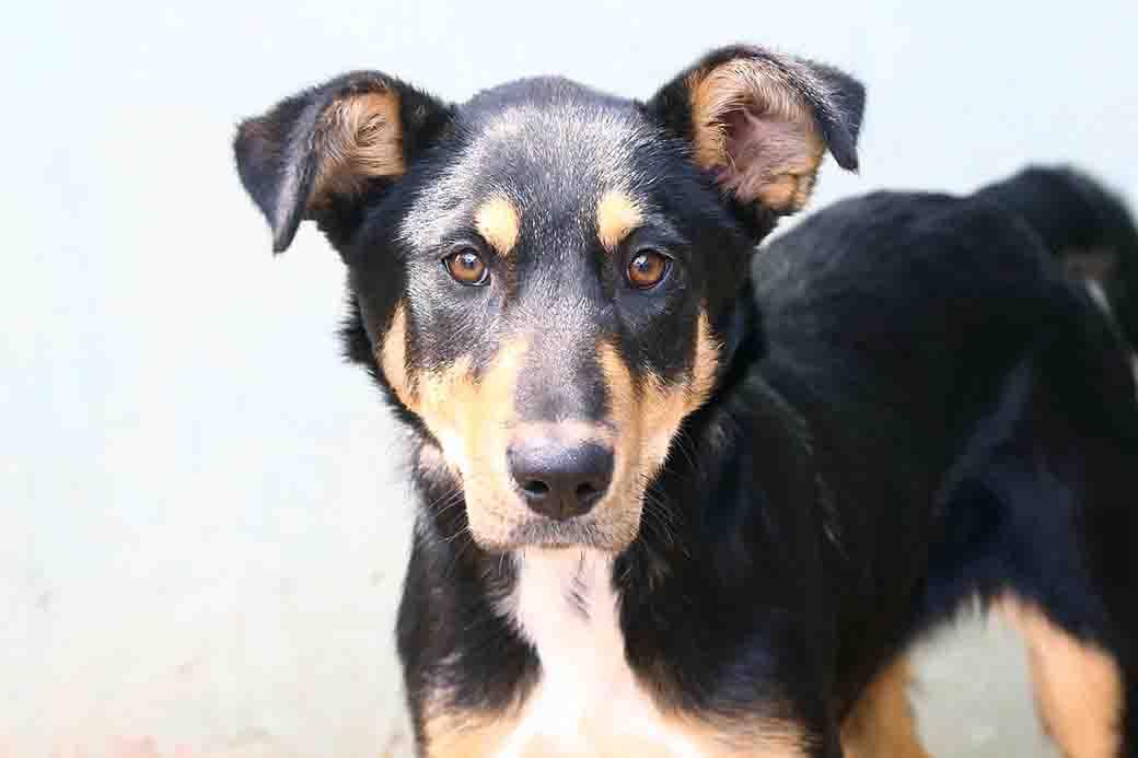 ג'סי – כלב לאימוץ – אגודה צער בעלי חיים ישראל