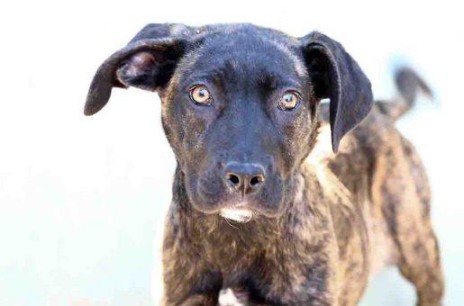 מייני – כלבה לאימוץ – אגודת צער בעלי חיים בישראל