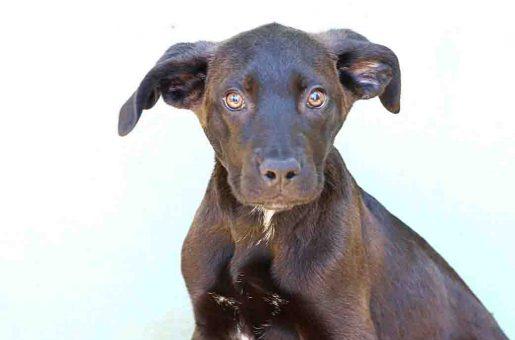 מיני – כלבה לאימוץ – אגודת צער בעלי חיים בישראל