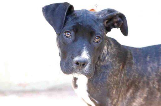 איני – כלבה לאימוץ – אגודת צער בעלי חיים בישראל