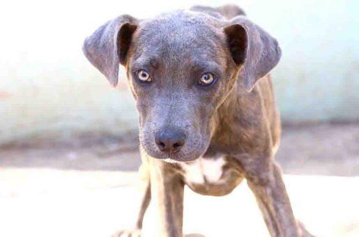 מו – כלב לאימוץ – אגודת צער בעלי חיים בישראל