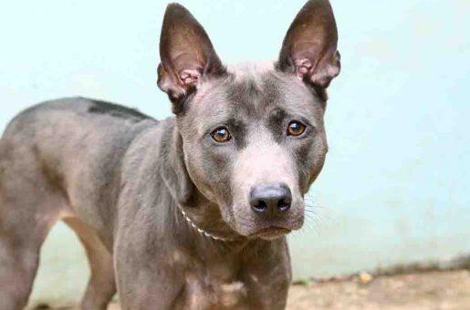 דולי – כלבה לאימוץ – אגודה צער בעלי חיים ישראל
