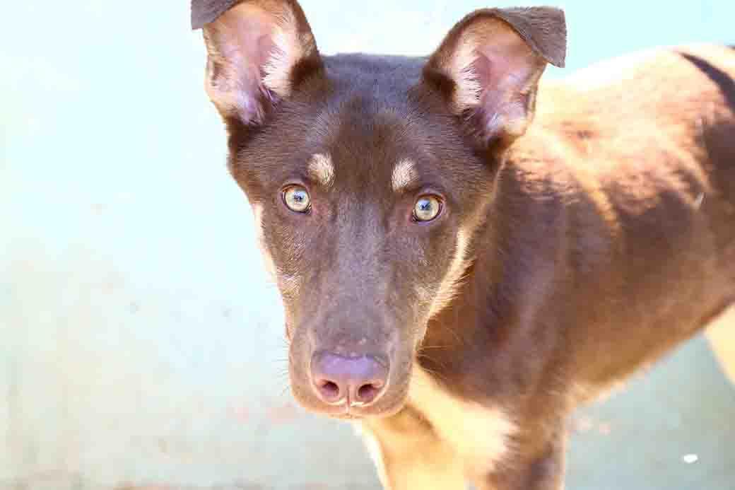 לאקי – כלבה לאימוץ – אגודת צער בעלי חיים בישראל