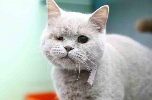 צוף – חתולה לאימוץ – אגודת צער בעלי חיים ישראל