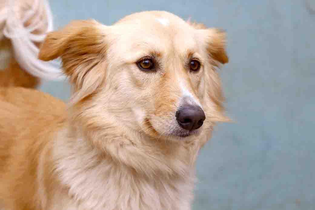 סקאי – כלבה לאימוץ – אגודה צער בעלי חיים ישראל