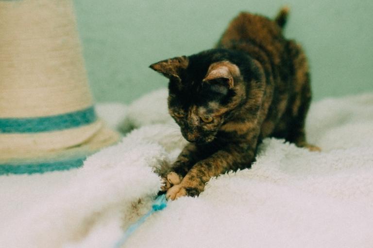 מארה - חתולה לאימוץ - אגודת צער בעלי חיים בישראל