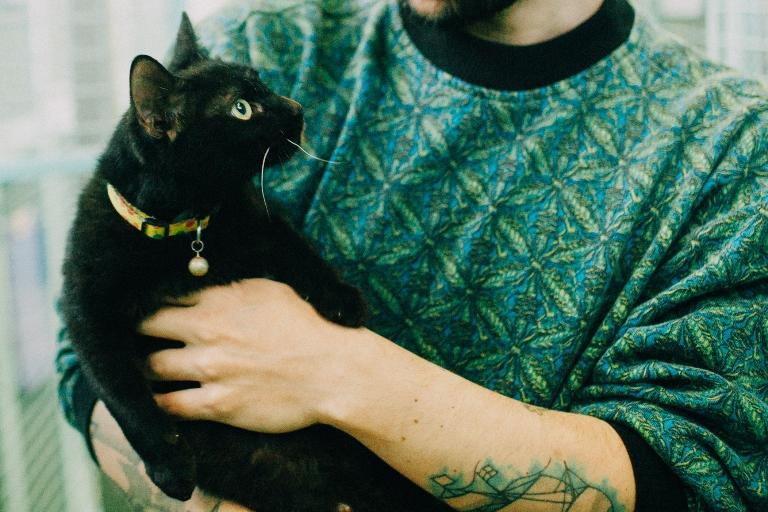 אוראו - חתולה לאימוץ - אגודת צער בעלי חיים בישראל