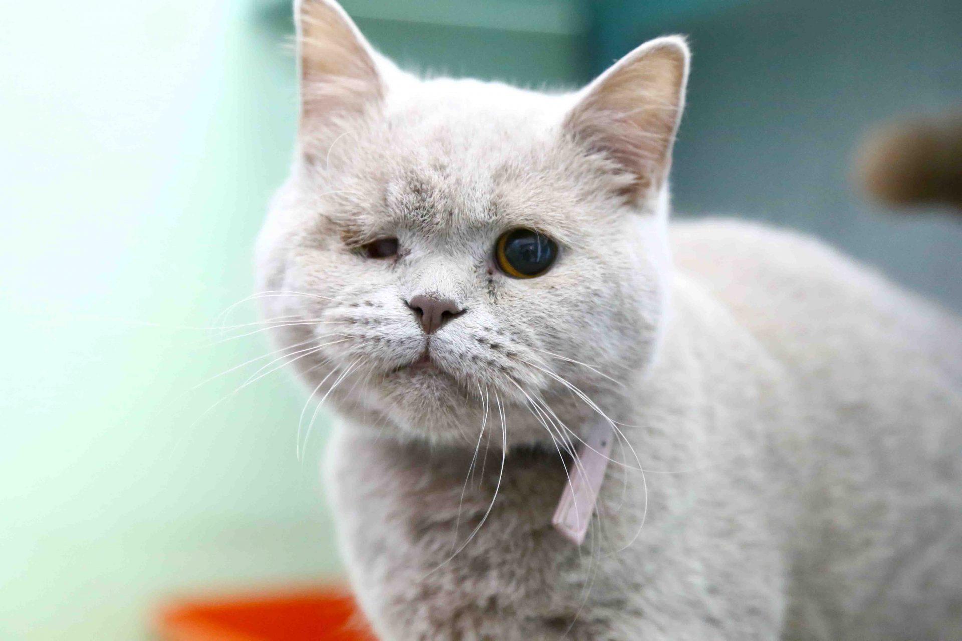 שרלוט – חתולה לאימוץ – אגודה צער בעלי חיים ישראל