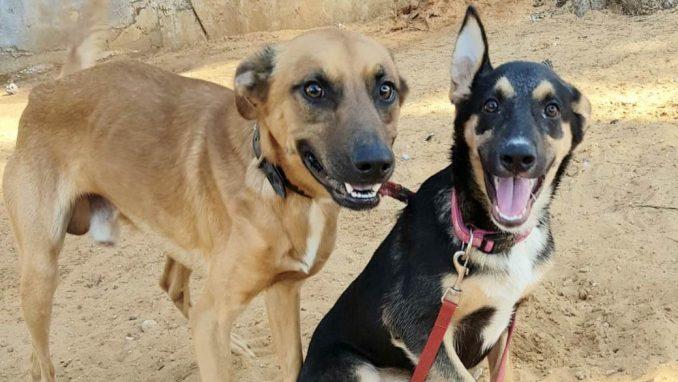 גיא לורד – כלב לאימוץ – אגודת צער בעלי חיים בישראל